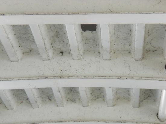 Spinnengewebe verschandeln den Anblick