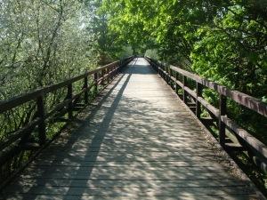 Spreewaldbahn: Fahrbahn nun für Radfahrer