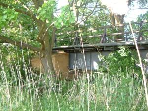 Von der Natur überwuchert: alte Vollwandbrücke